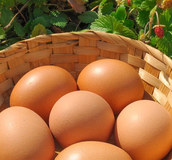 ricette come sostituire le uova Dott.ssa Elettra Terzani Nutrizionista