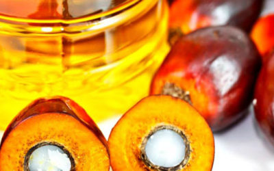 Olio di palma: pro e contro, punto per punto.