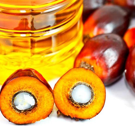 articoli olio di palma Dott.ssa Elettra Terzani Nutrizionista